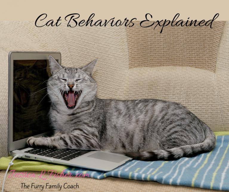 Cat Behavior Explained