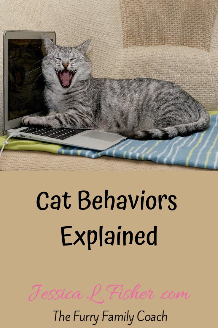 Cat Behaviors Explained