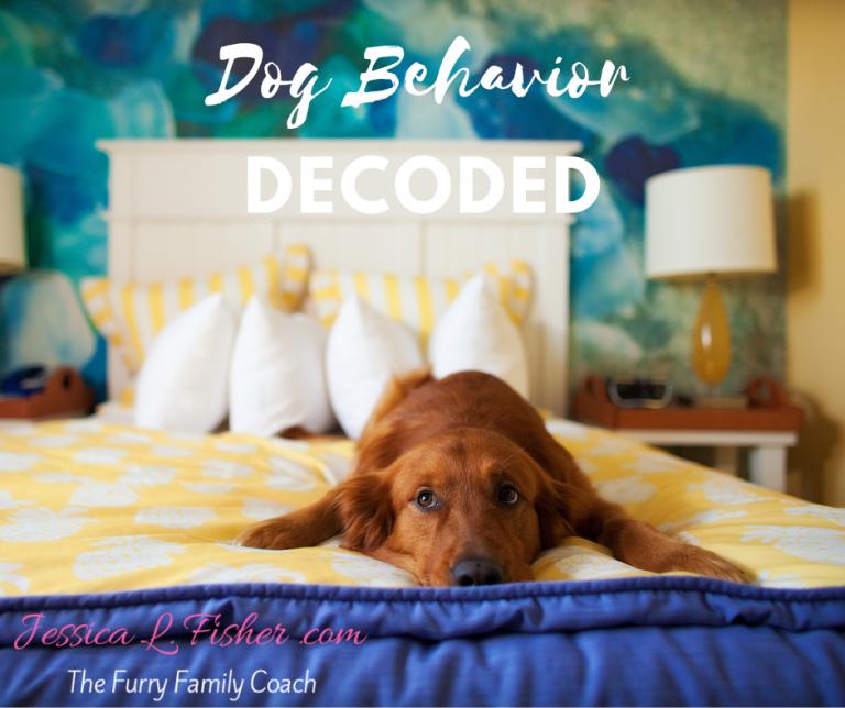 Dog Behavior decoded