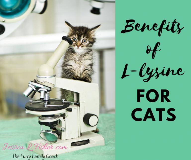 will l-lysine help my cat