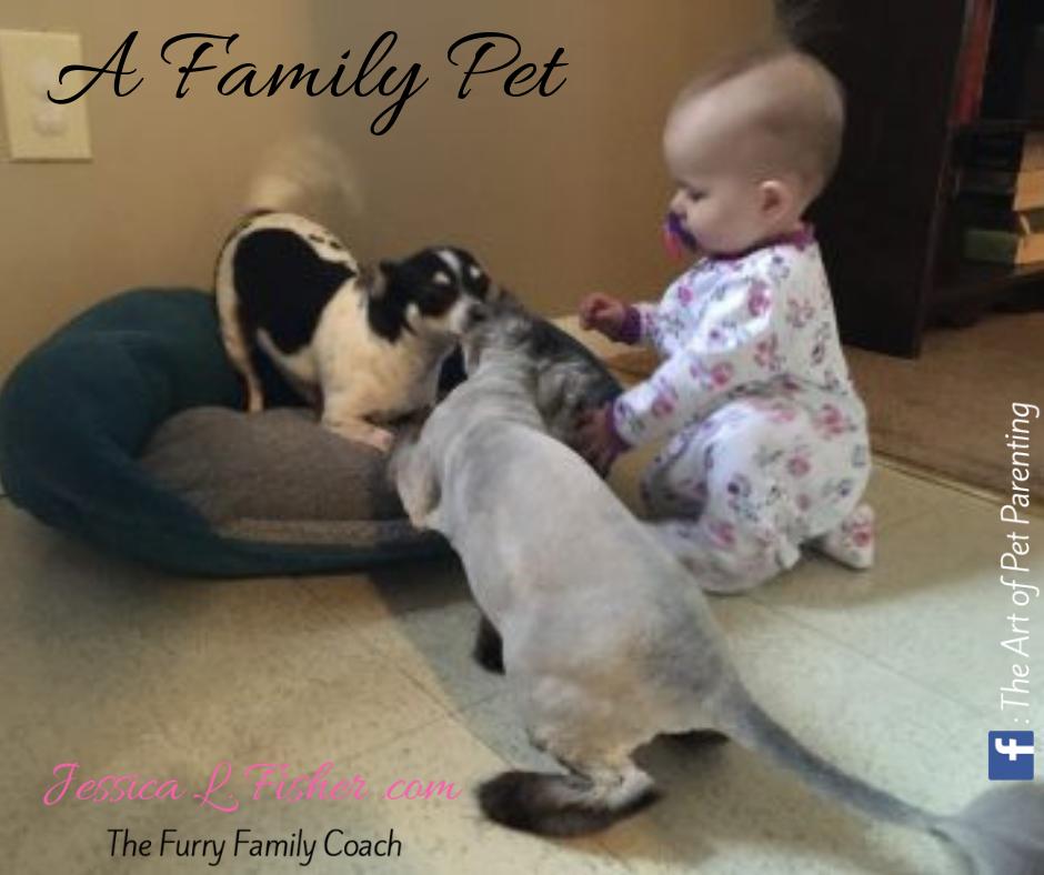 Choosing A Family Pet