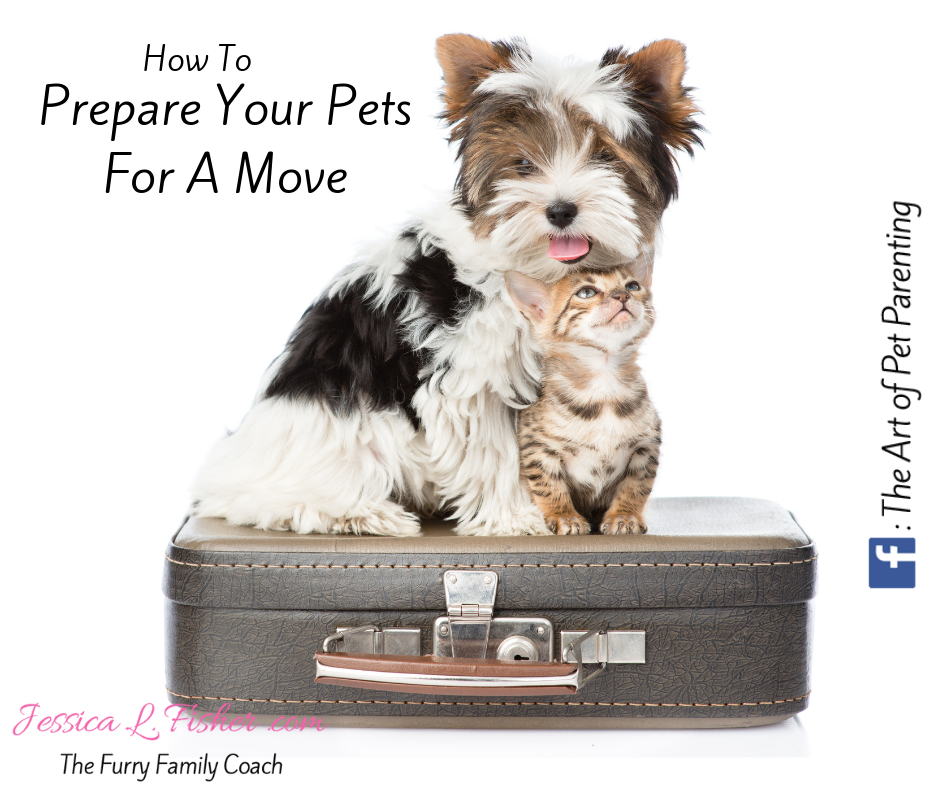 Preparing Your Pets For A Move