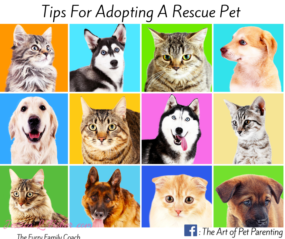 Tips for Adopting a Rescue Pet