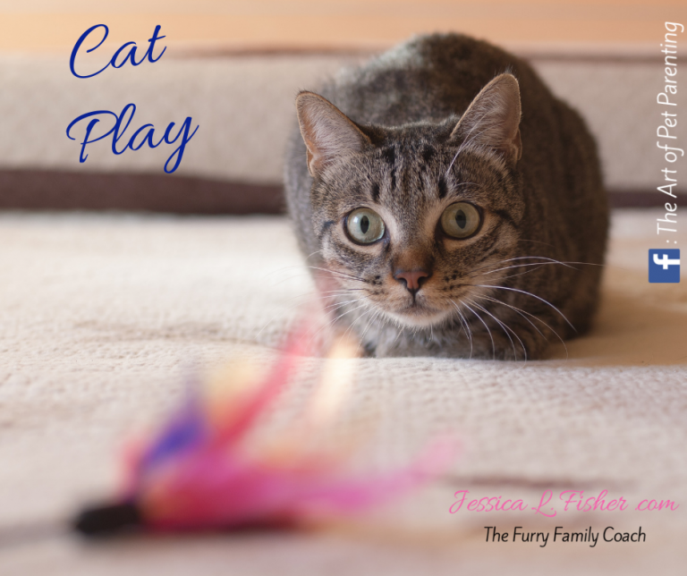 how to play with your cat