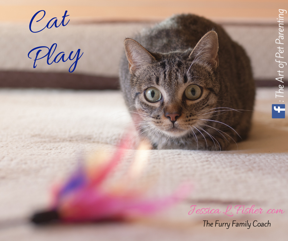 Cat Play – The Right Toys