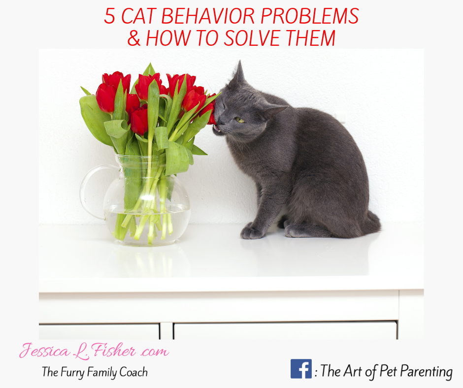 cat behavior problems