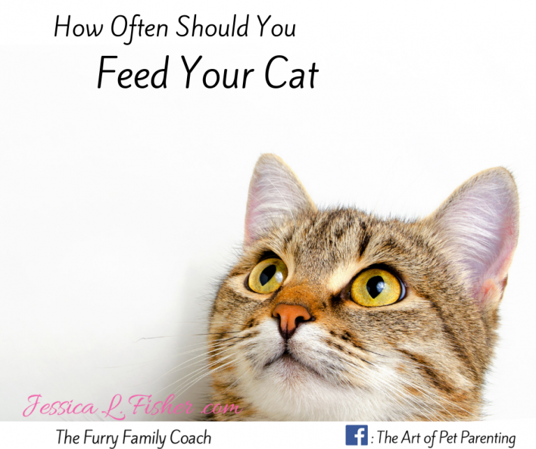 feed your cat