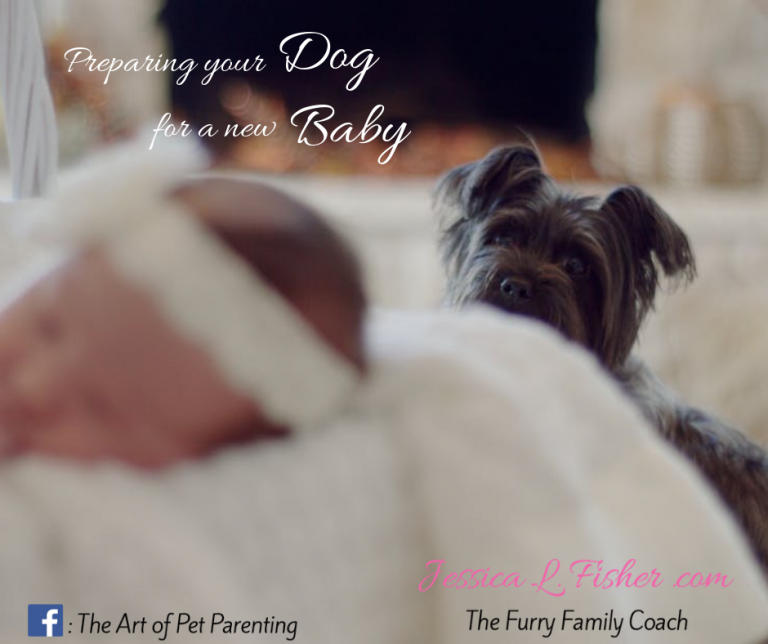 Preparing your dog for a new baby