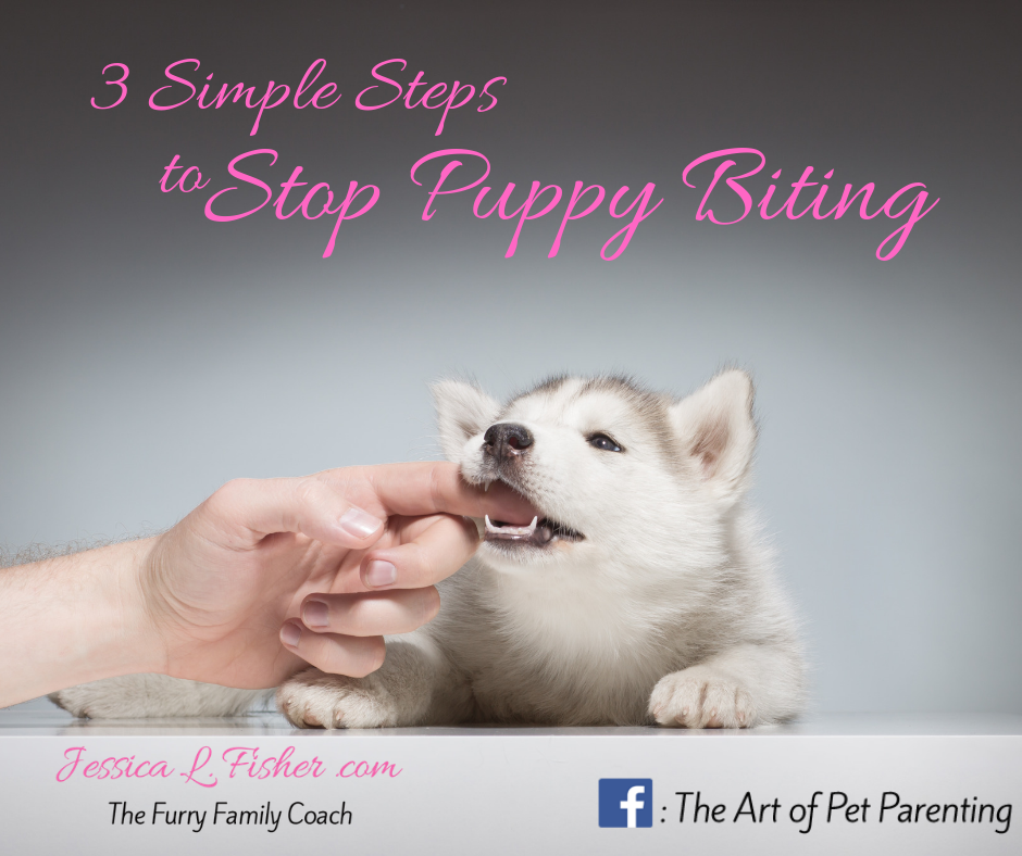 3 Simple Steps to Stop Puppy Biting