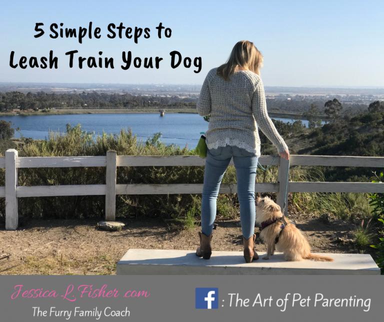 leash train dog