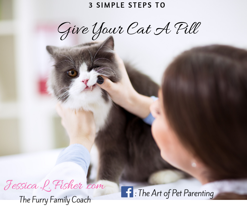 How To Give My Cat A Pill in 3 Simple Steps