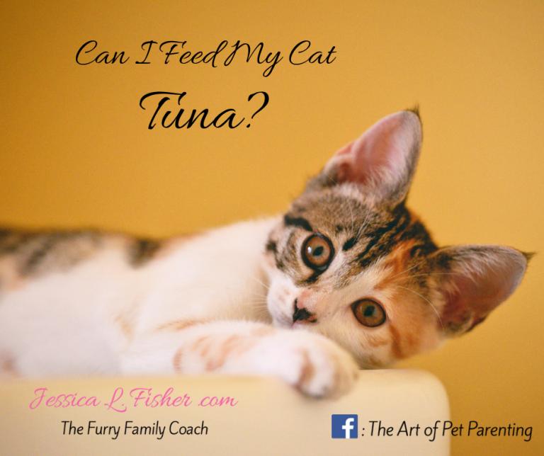 Can I Feed My Cat Tuna