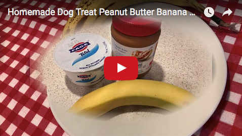 Homemade Dog Treat Peanut Butter Banana Yogurt Ice Cream