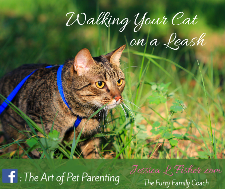 Walking Your Cat on a Leash