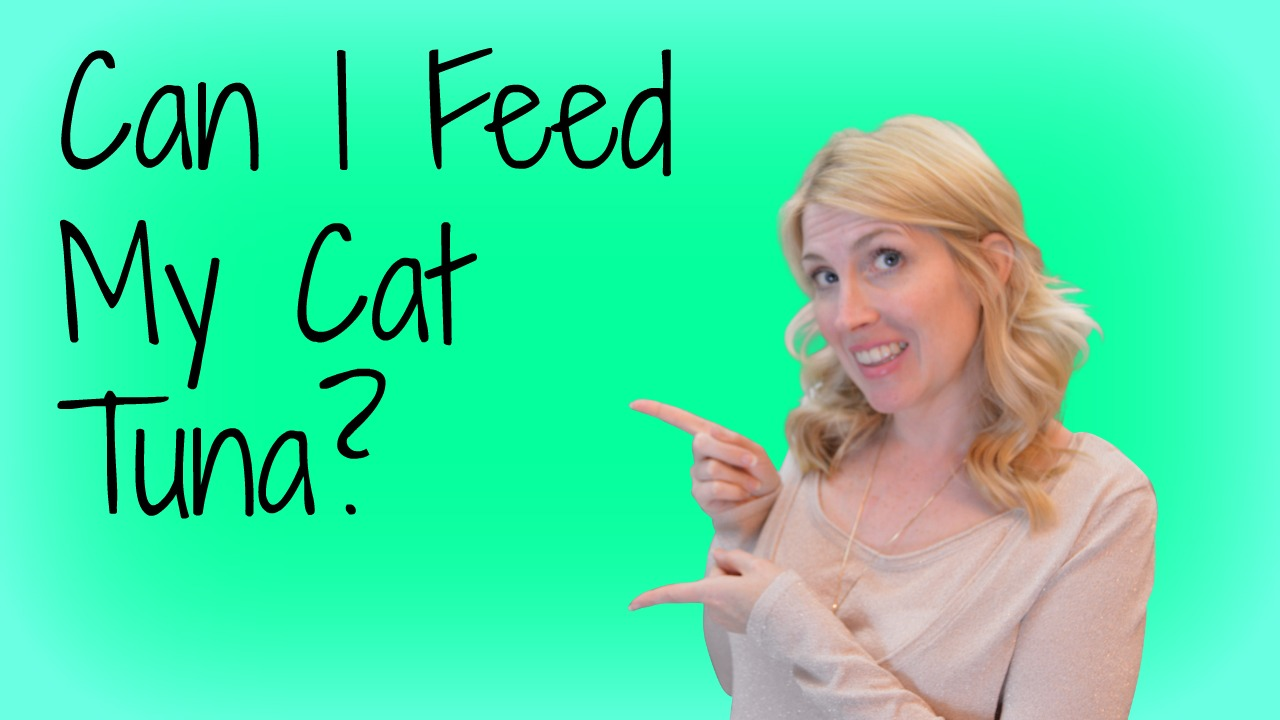 can I feed my cat tuna