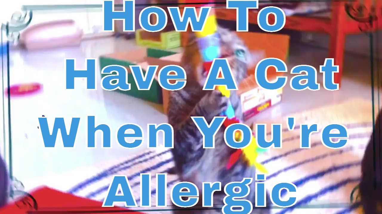 how to have a cat when allergic