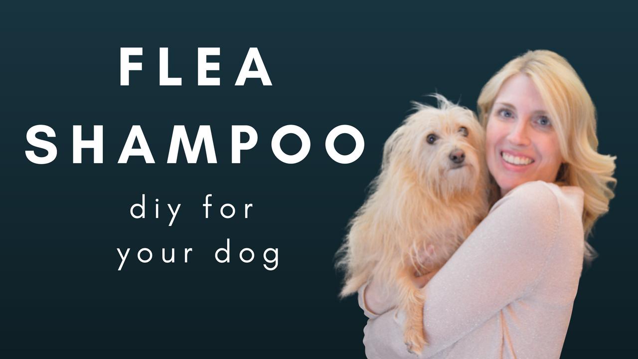 DIY DOG FLEA SHAMPOO