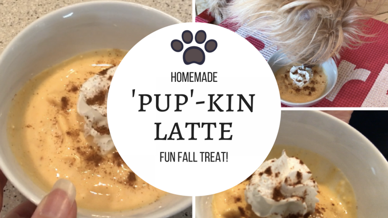 pumpkin latte for your dog