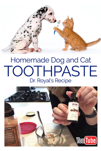 Homemade Dog and Cat Toothpaste Dr