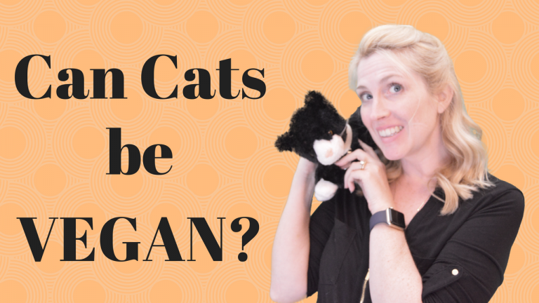 can cats be fed vegan diets