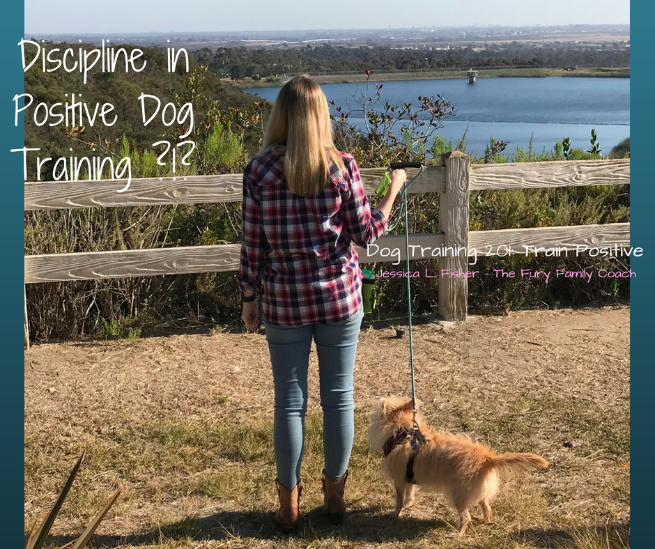Should I Discipline My Dog?