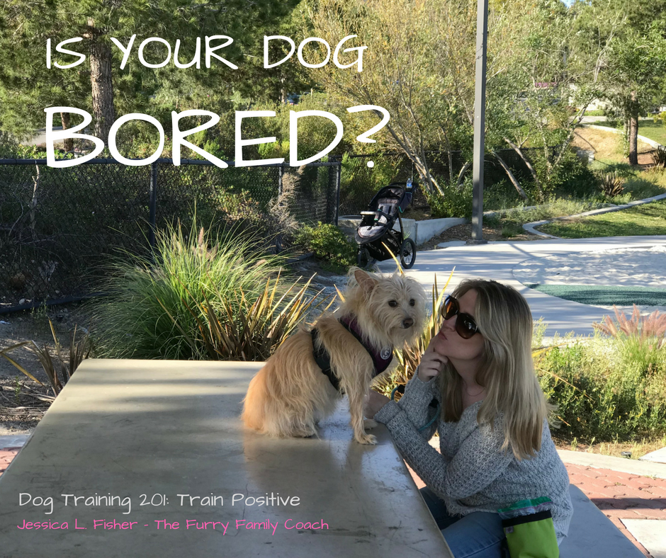 Is Your Dog Bored?