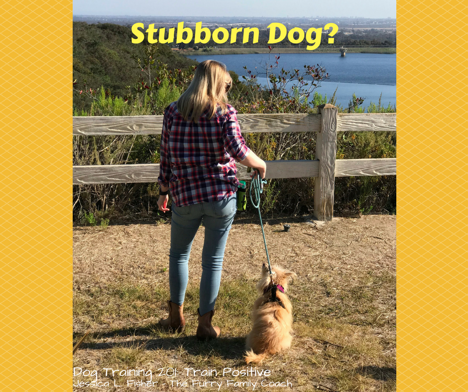 Is Your Dog Stubborn?