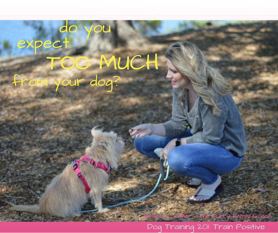 Are You Expecting Too Much From Your Dog?