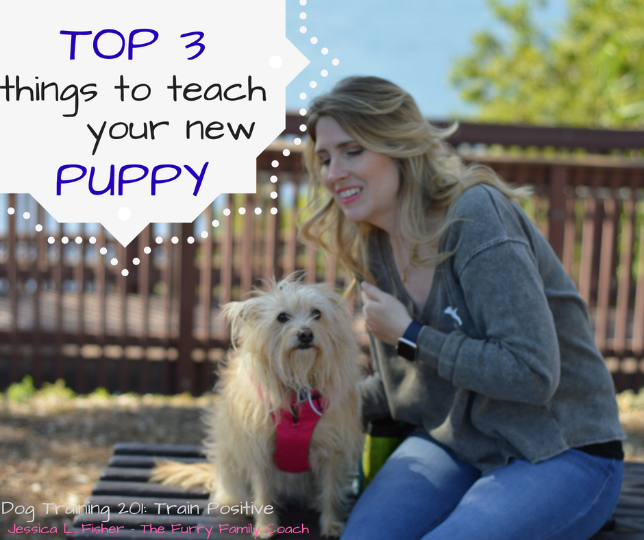 The Top 3 Things To Teach Your New Puppy