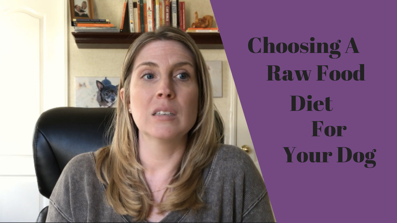 Choosing a Raw Dog Food