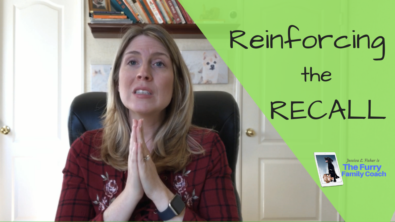 Reinforcing Your Dogs Recall