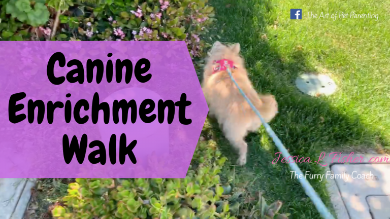 Canine Enrichment Walk