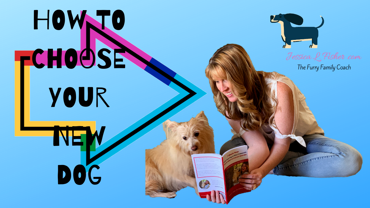 How To Choose Your Next Dog