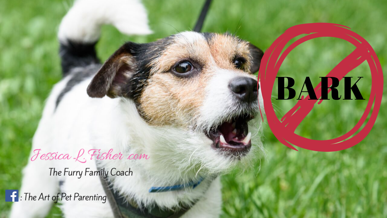 How To Get Your Dog To Stop Barking