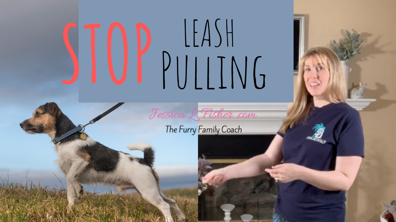 How To Teach Your Dog Not To Pull On The Leash