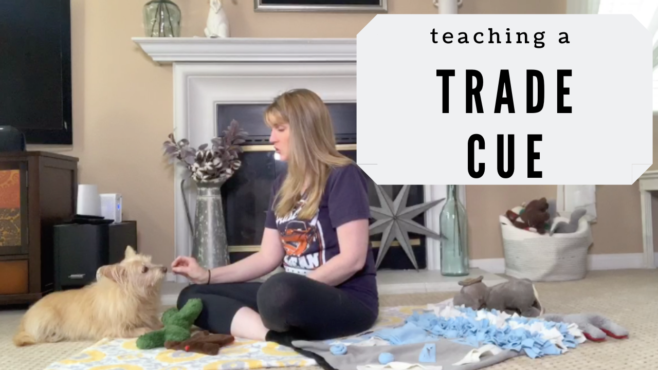 Teach Your Dog A Trade Cue