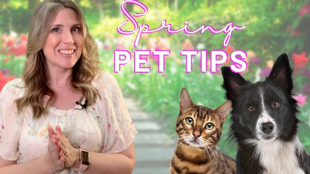 Pet Tips for Spring